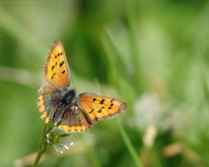 mariposa amarilla con puntos