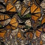 grupo de monarcas