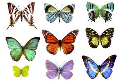 De que estan hechas las alas de las mariposas
