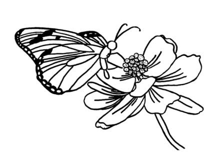 dibujo mariposa en flor