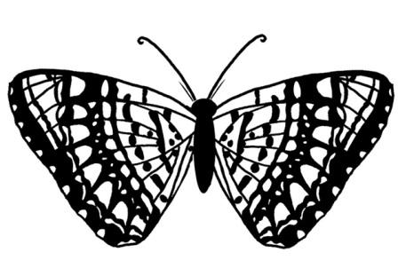 mariposa grande para colorear