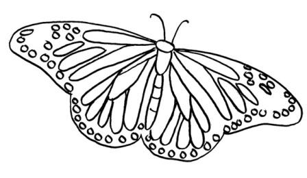 mariposa para niños