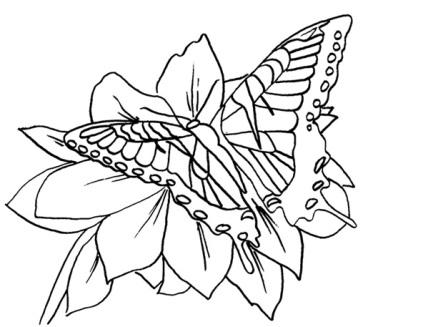 dibujo mariposa posada