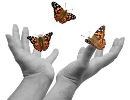 liberar mariposas